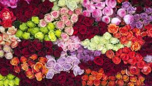 Where Do Roses Come From?