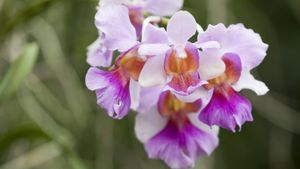What Is the Significance of an Orchid?