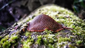 What Is a Slug's Habitat?
