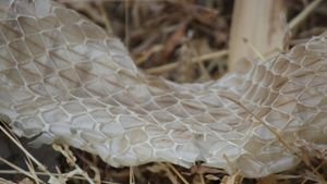 How Often Do Snakes Shed Their Skin?