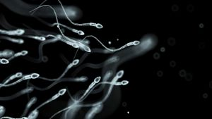 What Is Spermatozoa?