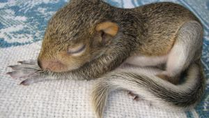 Do Squirrels Sleep at Night?