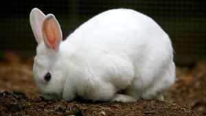 What Are the Stages of a Rabbit's Life Cycle?