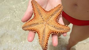 Where do starfish live?