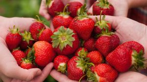 When Is Strawberry Picking Season?