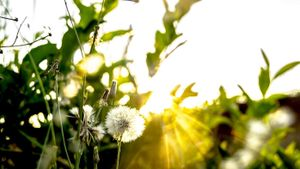 Why is sunlight needed for photosynthesis?