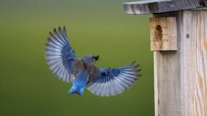 What is the symbolic meaning of a bluebird?