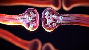 What Are the Three Parts of a Synapse?