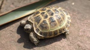 Where do tortoises live?
