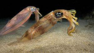 What Are the Types of Squids?