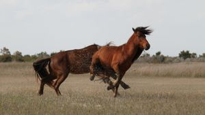 What Is a typical daily routine of wild horses?