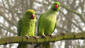 What Are Some Unique Facts About Parakeets?