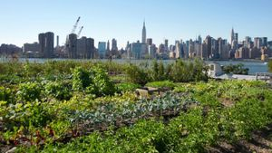 What Is Urban Agriculture?