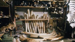 What Are the Uses of Elephant Ivory?
