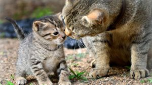How do various animals take care of their young?