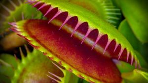 Where Do Venus Flytraps Live?