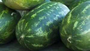 Where is watermelon grown in the world?