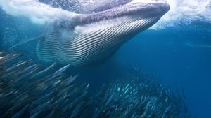 Are Whales Herbivores?