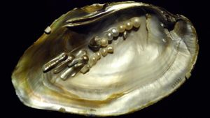 What Are Biwa Pearls?