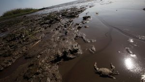 What Causes Oil Spills?