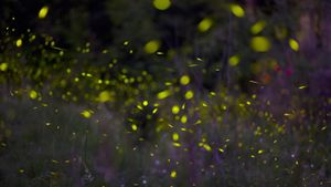 What Is the Color of Fireflies?