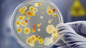 What Is a Petri Dish?