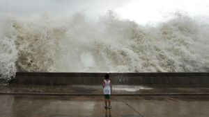 What Is a Typhoon?