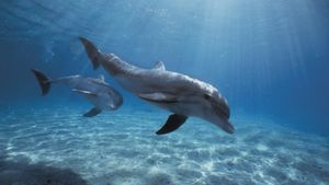 What Is the Scientific Name for a Dolphin?