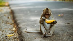 What kind of food do monkeys eat?