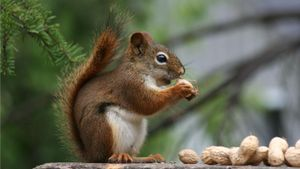 What Kind of Nuts Do Squirrels Eat?