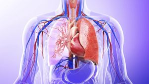 What role do the lungs have in the excretory system?