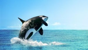 Where do killer whales live?