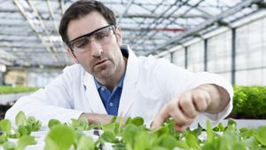 Where is food stored in a plant?