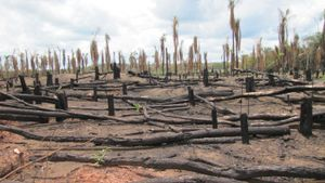Why is deforestation a bad thing?