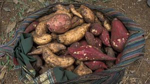 Where Do Yams Come From?