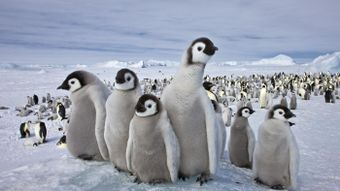 What Animals Live in the South Pole?