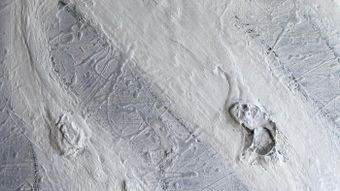 What Colors Make White Paint?