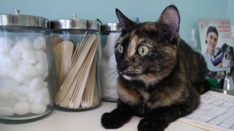 What Is the Difference Between Spay and Neuter?