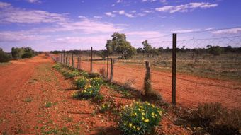 What Is the Dingo Fence?