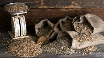 What Foods Contain Gluten?