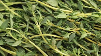 How Much Is a Sprig of Thyme?