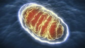 What Are the Organelles That Break Down Sugar to Produce Energy?