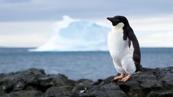 What Prevents the Resources of Antarctica From Being Used?