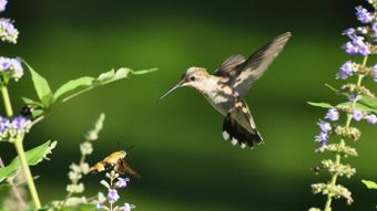 What Is the Smallest Bird in the World?