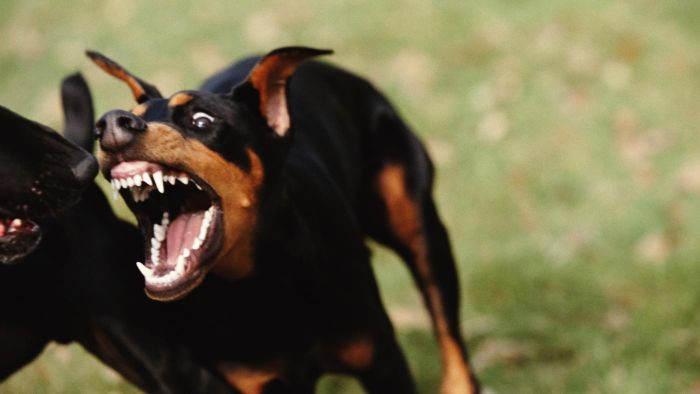 Who Are the 10 Most Aggressive Dogs?