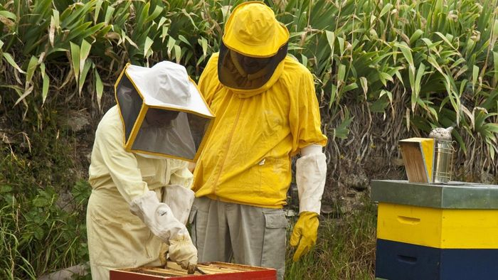 What Is the Scientific Name for Beekeeper?