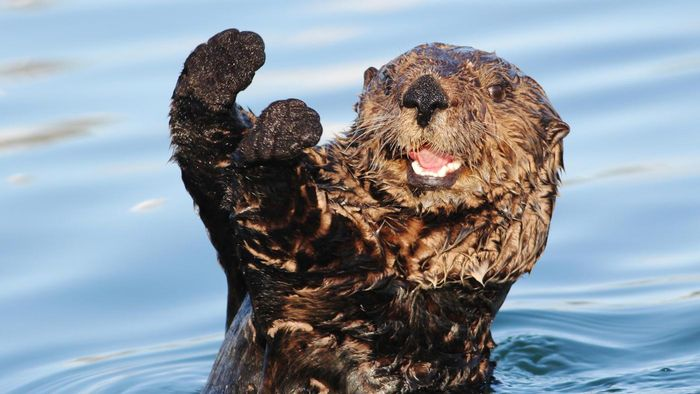 What Are Some Facts About Sea Otters?
