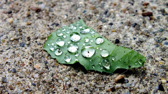 Why Is Acid Rain a Problem?