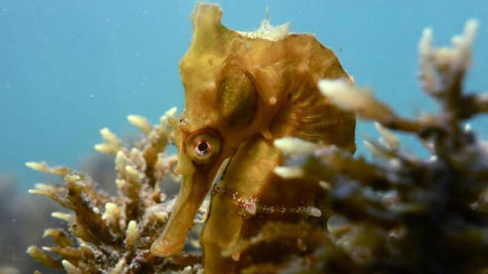 What Are Some Adaptations of a Seahorse?