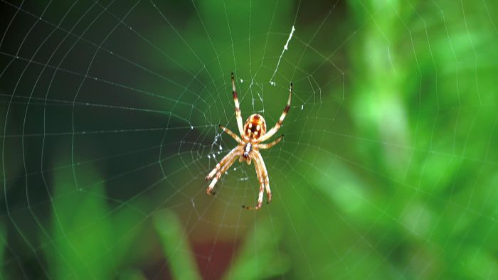 What Are Some Adaptations That Spiders Have?